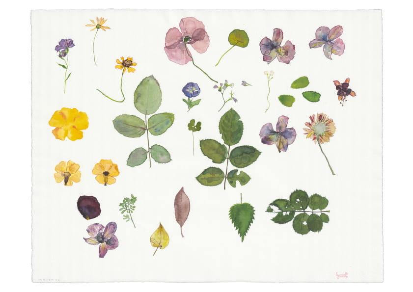 Herbarium (2012), Aquarell 50 x 65 cm 0
