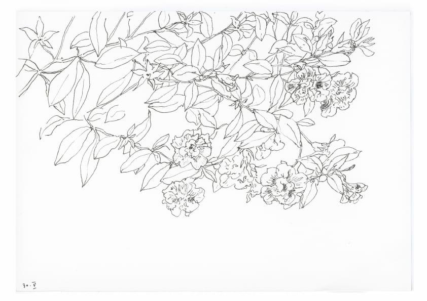 Petunien (Mai 2020), Tuschezeichnung 30 x 40 cm 99