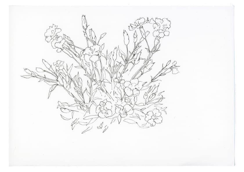 Kleine Nelken (Mai 2020), Tuschezeichnung 20 x 30 cm 11