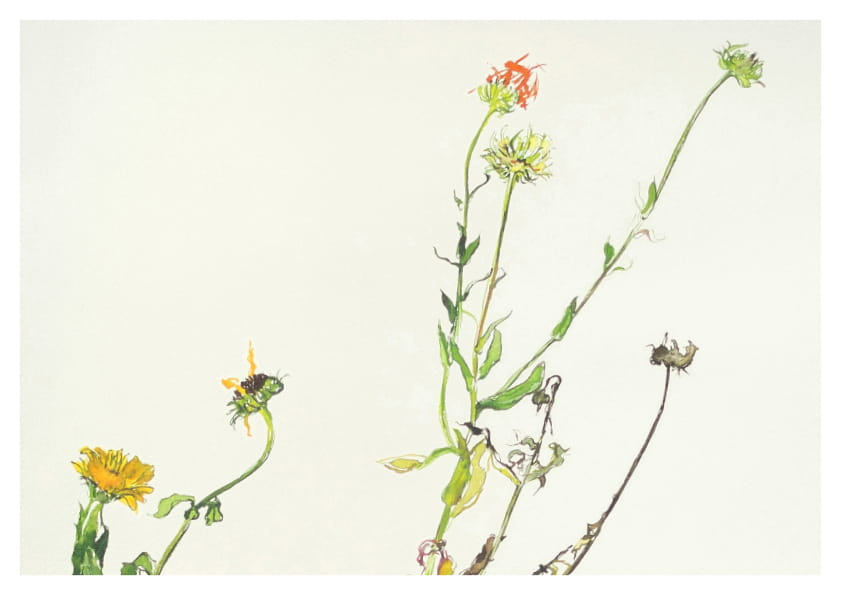 Ringelblume, Detail (2014), Aquarell 50 x 65 cm 12