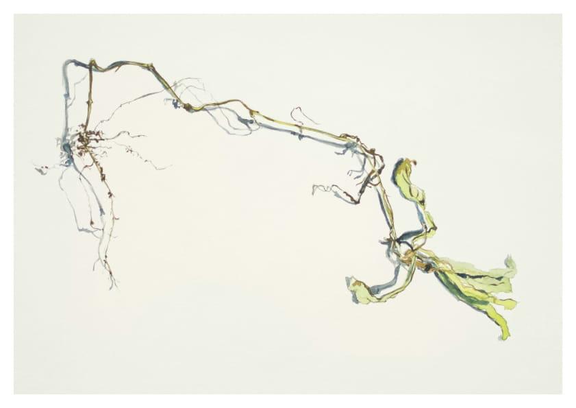 Ringelblume mit Wurzel (2014), Aquarell 50 x 65 cm 14