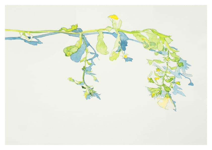 Weiße Wildblume (2014), Aquarell 50 x 65 cm 17