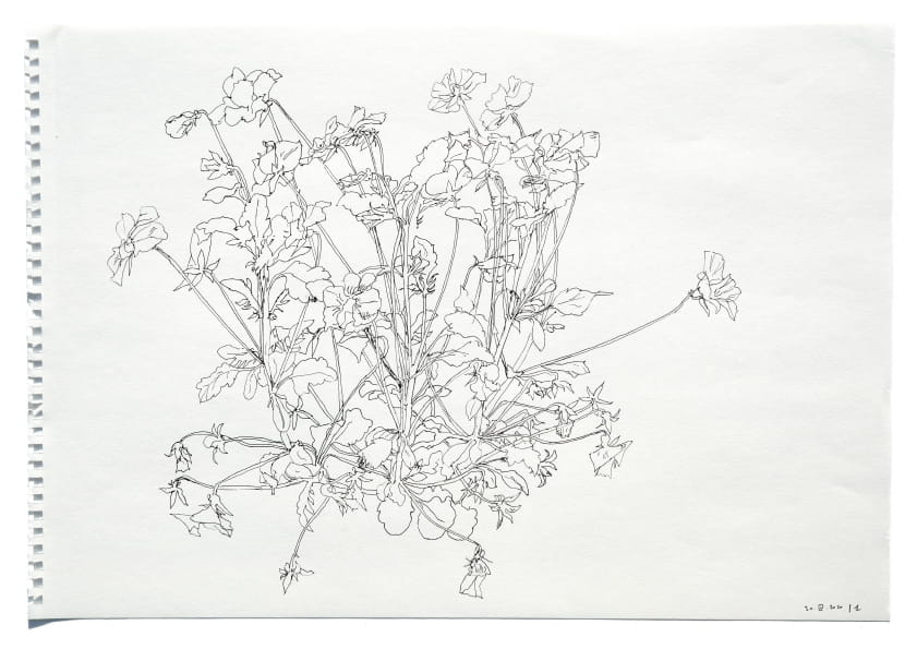 Kleine Stiefmütterchen (April 2020), Tuschezeichnung 30 x 40 cm 18