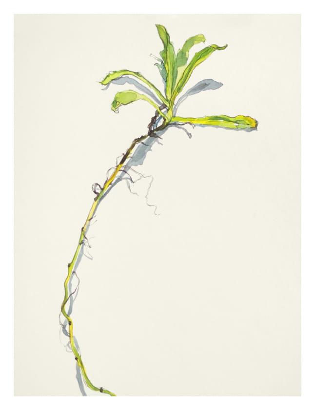 Ringelblume, Detail (2014), Aquarell 42 x 33 cm 23