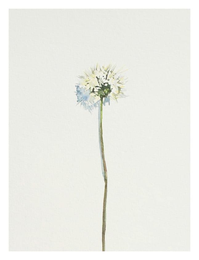 Pusteblume (Mai 2020), Aquarell 42 x 33 cm 30
