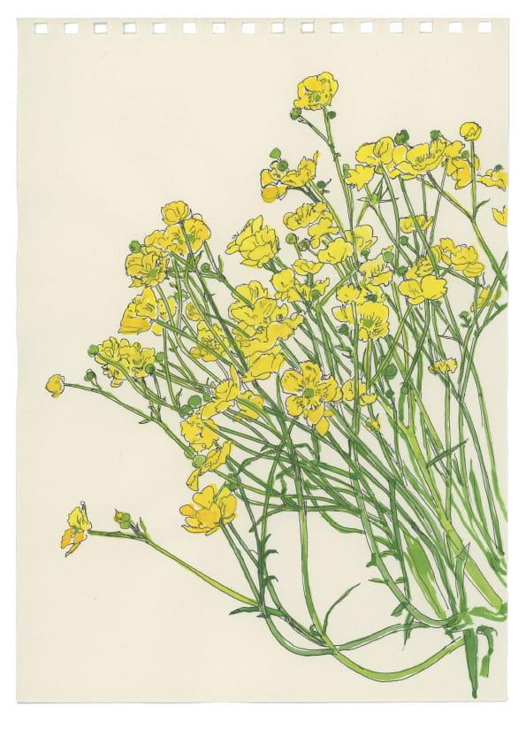 Butterblumen (April 2020), kolorierte Tuschezeichnung 30 x 20 cm 34