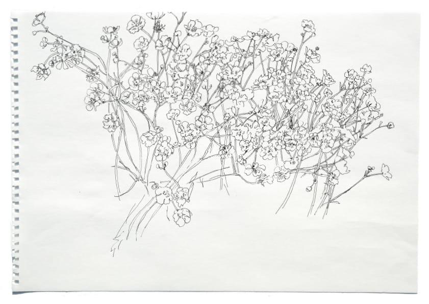 Butterblumen (April 2020), Tuschezeichnung 30 x 40 cm 3