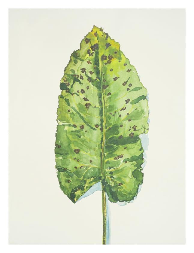 Großes Blatt, Detail (2014), Aquarell 50 x 65 cm 41