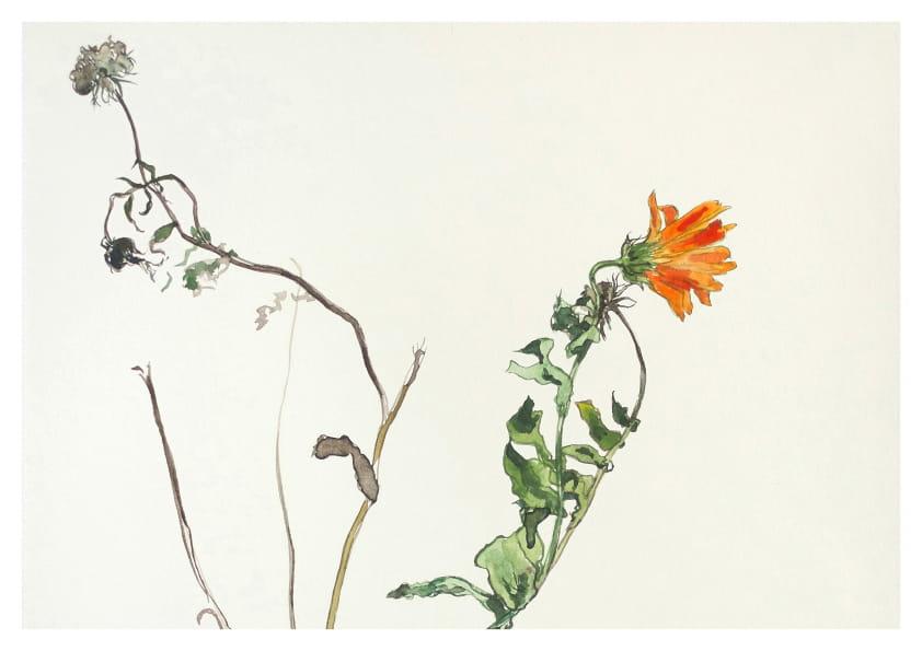 Ringelblumen, Detail (2019), Aquarell 32 x 42 cm 42