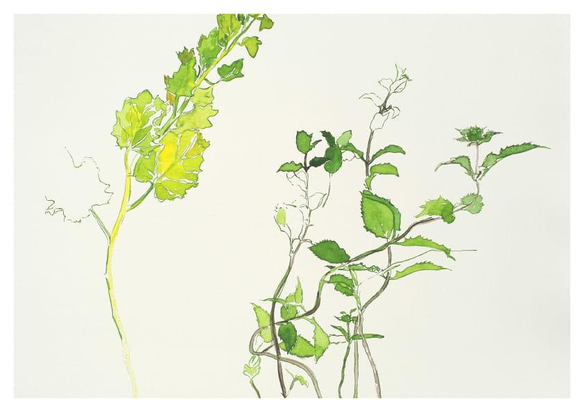 Verschiedene Zweige, (Mai 2020), Aquarell 50 x 65 cm 43