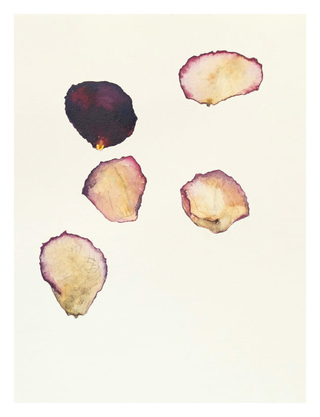 Rosenblütenblätter, (Mai 2020), Aquarell 30 x 20 cm 45