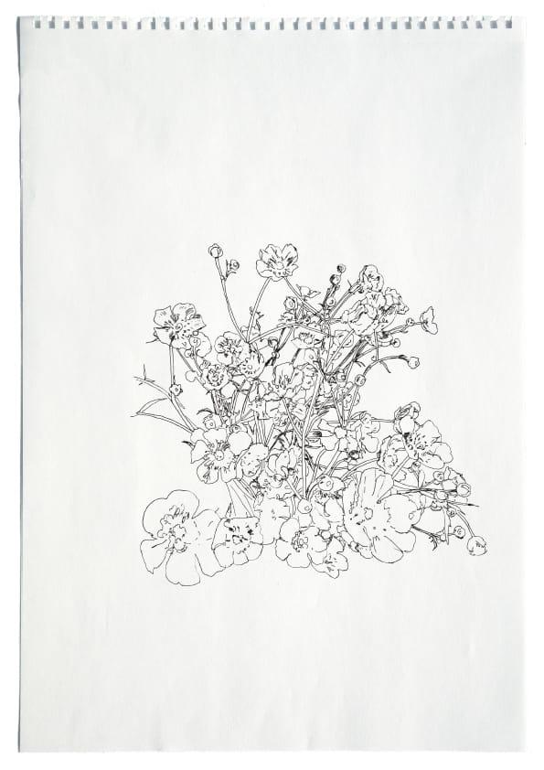 Butterblumen (April 2020), Tuschezeichnung 40 x 30 cm 49