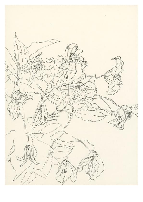 Verschiedene Blüten (April 2020), Tuschezeichnung 30 x 20 cm 51
