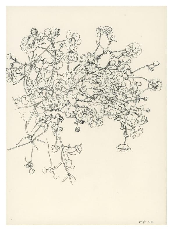 Butterblumen (April 2020), Tuschezeichnung 30 x 20 cm 52
