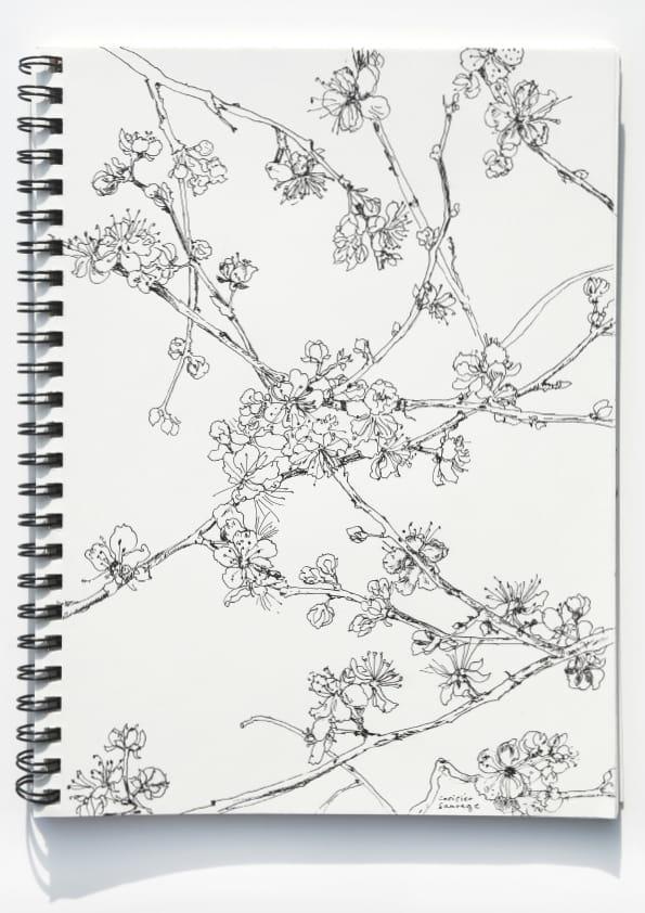Kirschblüten (April 2020), Tuschezeichnung 40 x 30 cm 53