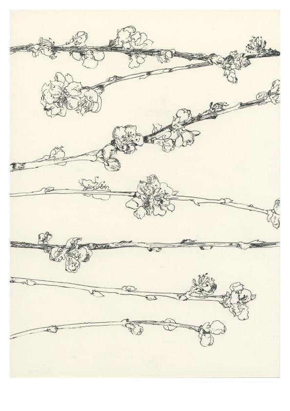 Mirabellenblüten (März 2020), Tuschezeichnung 30 x 20 cm 54