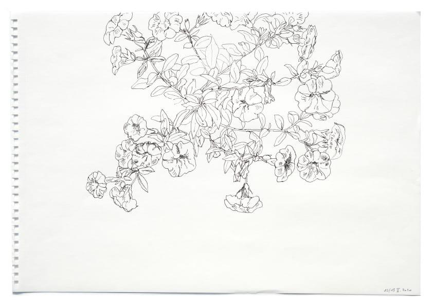 Petunien (Mai 2020), Tuschezeichnung 30 x 40 cm 57