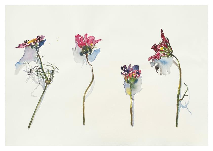 Vier verwelkte Anemonen (2014), Aquarell 50 x 65 cm 5