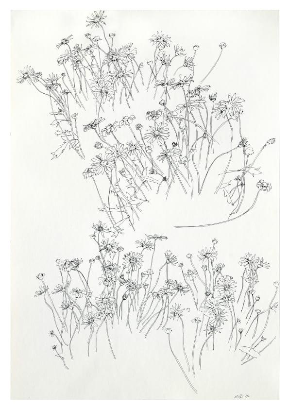 Aschenblumen (Mai 2020), Tuschezeichnung 50 x 35 cm 63