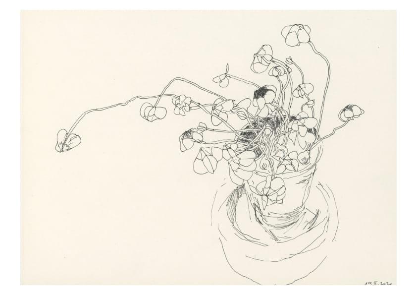 Glücksklee (Februar 2020), Tuschezeichnung 20 x 30 cm 65