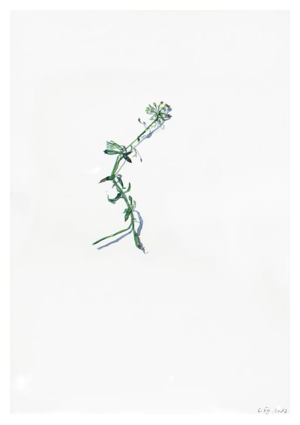 Ein unbekanntes Blümchen (2012), Aquarell 42 x 33 cm 68