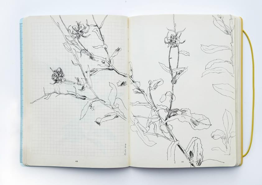 Ringelblumen (2016), Tuschezeichnung 24 x 18 cm 73