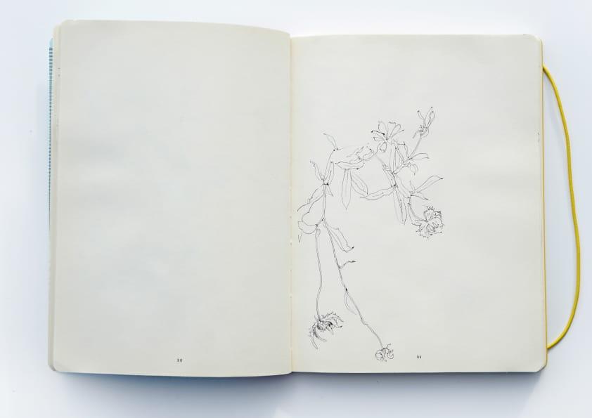 Ringelblumen (2016), Tuschezeichnung 24 x 18 cm 74