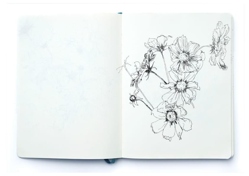 Anemonen (2019), Tuschezeichnung 24 x 18 cm 76