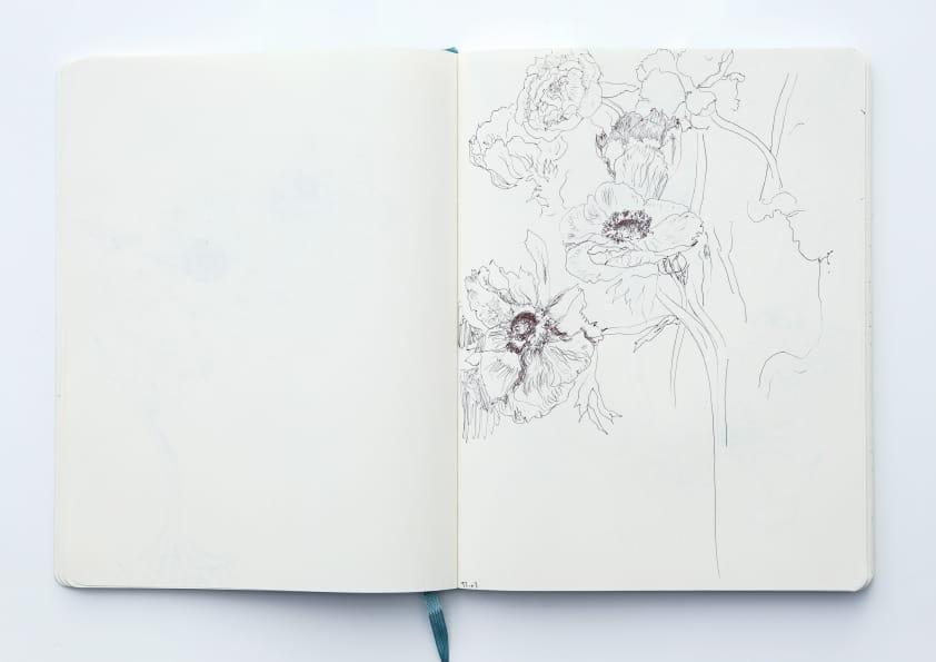 Anemonen (2019), Tuschezeichnung 24 x 18 cm 79