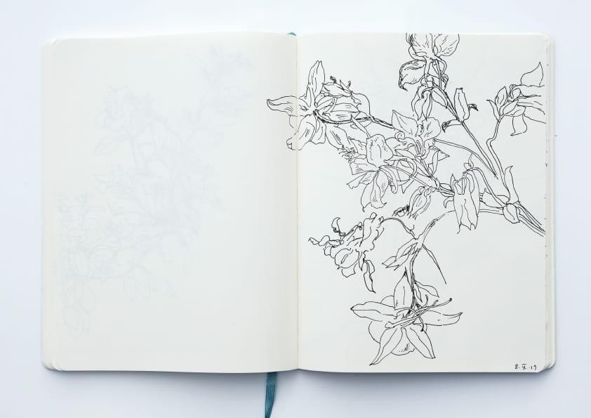 Akelei (2019), Tuschezeichnung 24 x 18 cm 81