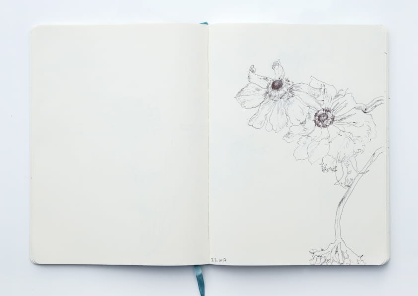 Anemonen (2017), Tuschezeichnung 24 x 18 cm 82
