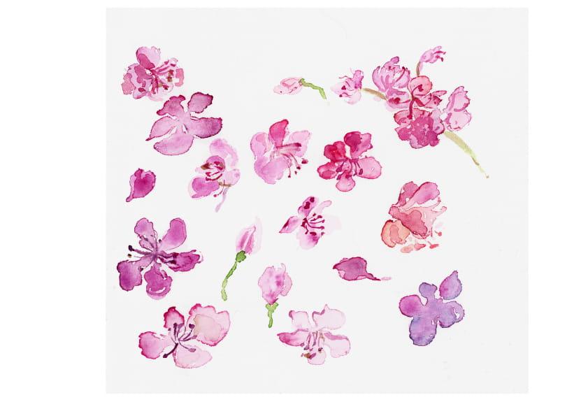 Kirschblüten (April 2020), Aquarell 30 x 28 cm 8
