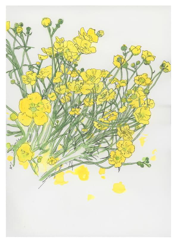 Butterblumen (April 2020), kolorierte Tuschezeichnung 40 x 30 cm 91