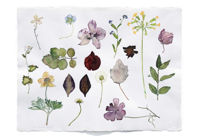 Herbarium (2015), Aquarell 30 x 40 cm 94