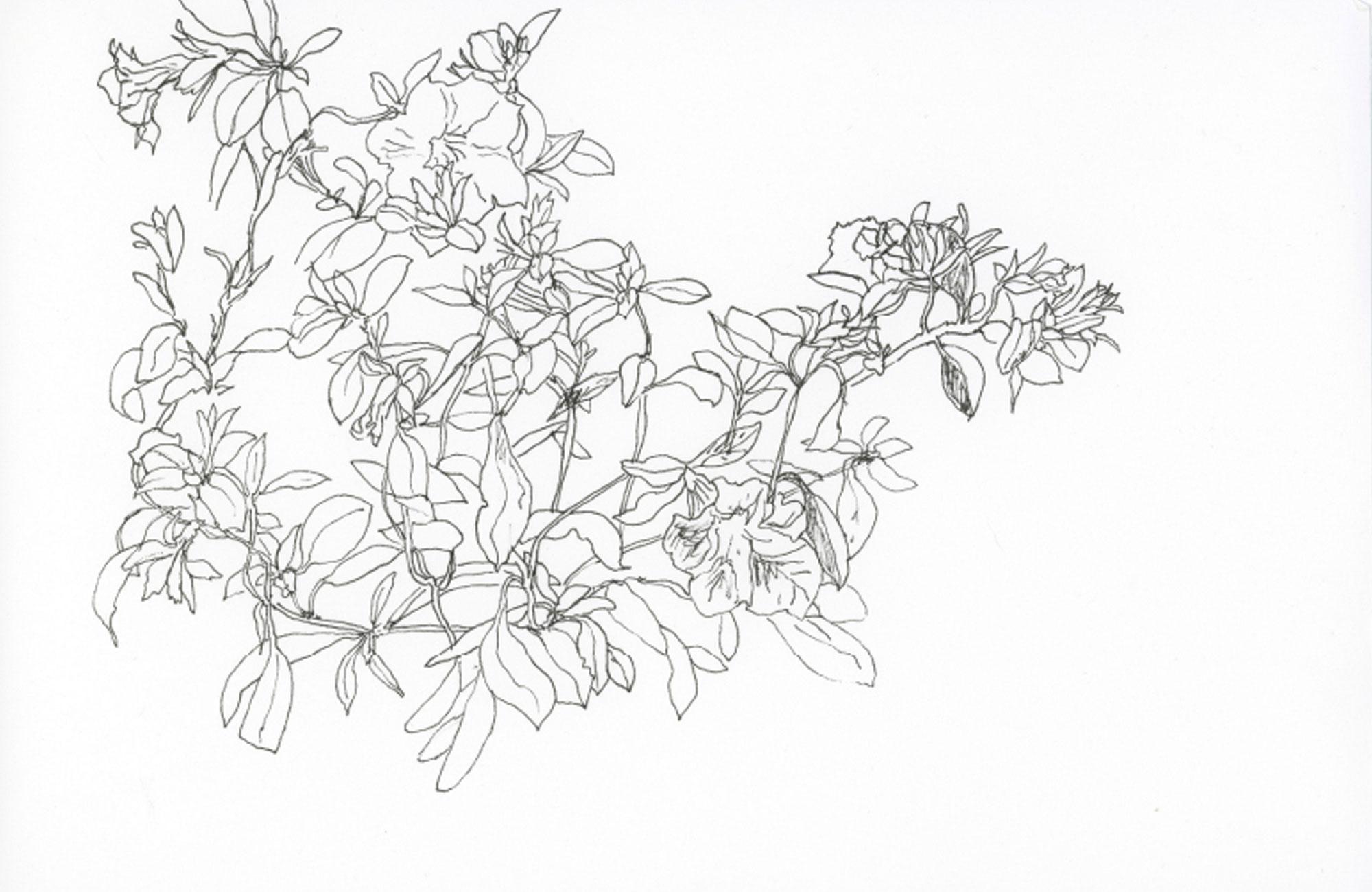 Carnets de Fleurs & Wie man Sommersprossen bekommt